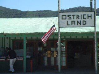Sideways - Ostrich Land